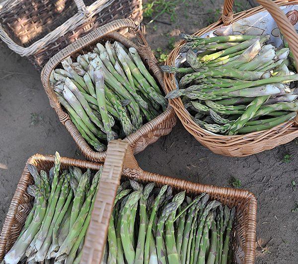 Asparagus in Baskets_Spilmans Sessay
