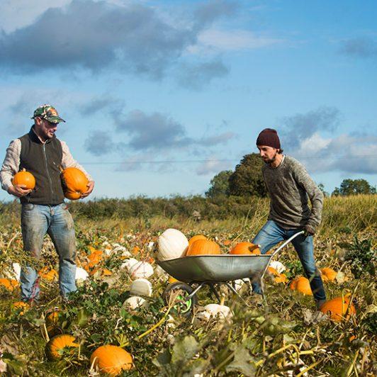 FARM_Pumpkins_Spilmans