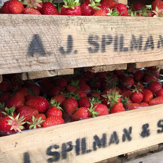 Strawberry-Farmers-_spilmans