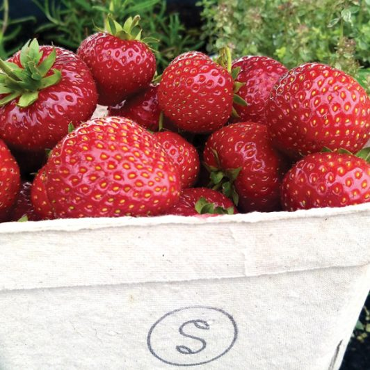 PYO-strawberrys-Spilmans-Farm