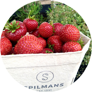Recycled-Punnets