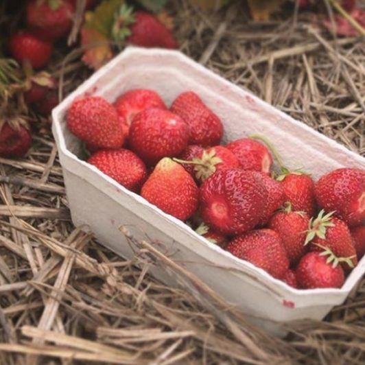Recycled-Punnets_Spilman-Farming
