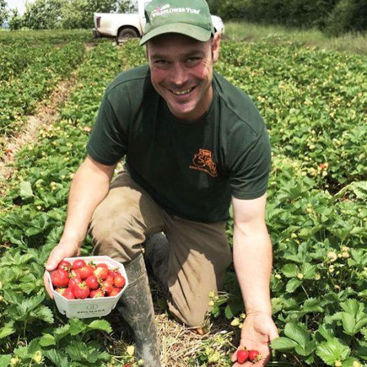 Tom-Spilman-PYO-Strawberrys