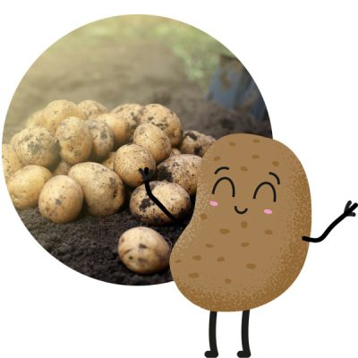 PYO_Big-Dig-Event_Spilmans-Farm_PYO-potatoes